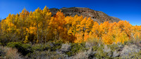 10/9/2015 - Eastern Sierra Fall Colors