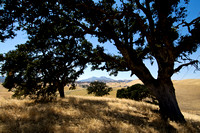 Save Mount Diablo's Dry Creek I Property