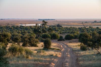 Morning Light at Chobe