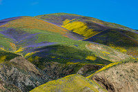 4/7/2017 Carrizo Plain Superbloom