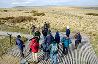 Birding the Pinguinera at Seno Otway, Patagonia