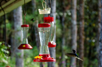 Hummingbird (and honeycreeper) feeders