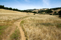 The Meadow Trail