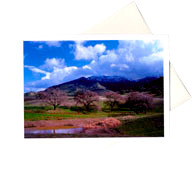 Photo Note Cards