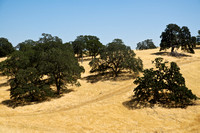 Cowell Ranch - Los Meganos State Historic Park