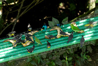 Tropical Birds on Fruit Feeder