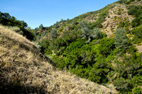 Perkins Canyon