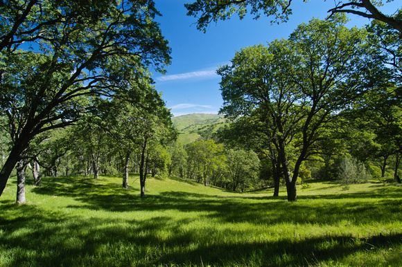 Spring on Mount Diablo