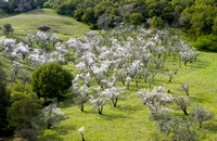 The Clyma Almond Orchard